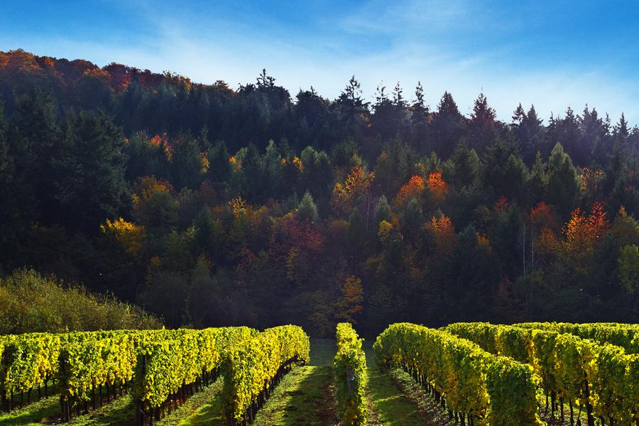 Herbstlandschaft | Riol
