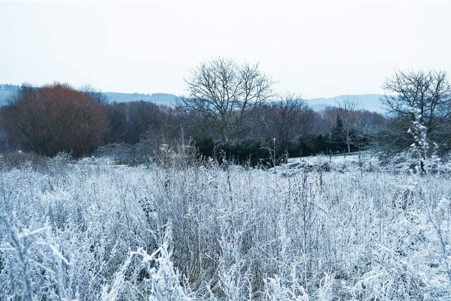 Winterlanschaft_Riol