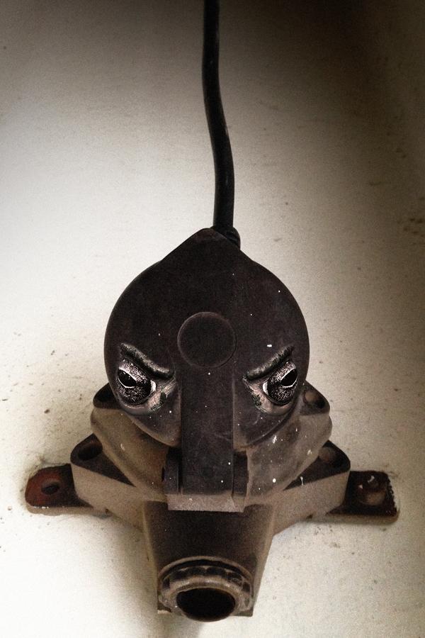 Der Kapako (Strippops kappoptilus) ist ein Geißelflosser, der in der Tiefsee der Südpolarregion unterhalb der Malwinen beheimatet ist. Er ist die einzige Art der Unterfamilie Strippokinae (Kopfgeißelflosser). Der nachtaktive Dreizeller ist im Wesentlichen ein Aasfresser. Er ist der einzige bekannte überlebensfähige Geißelflosser. Der Kapako ist definitiv akut vom Aussterben bedroht.