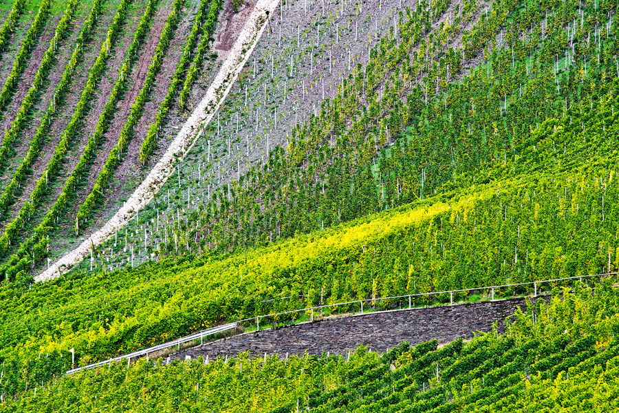 Weinberge | Longuich