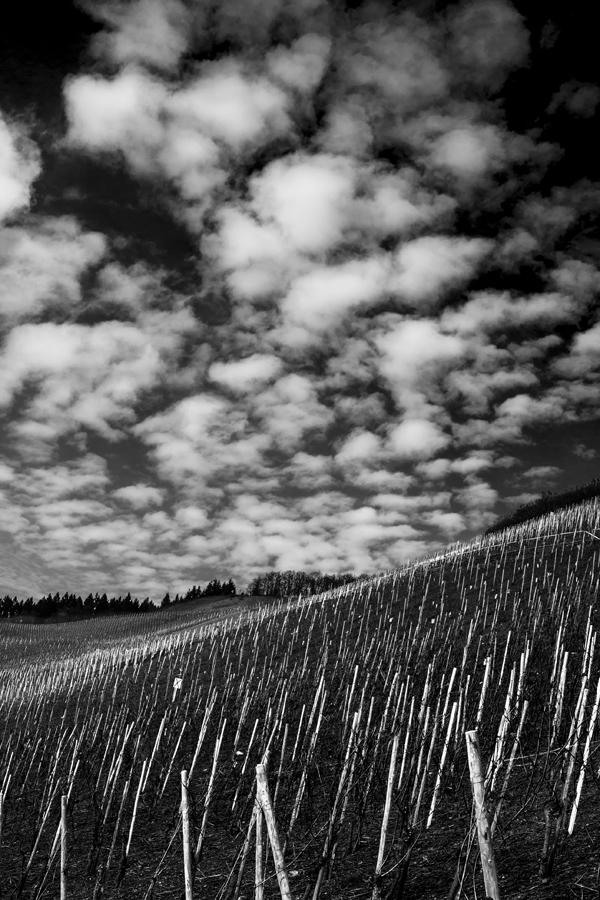 Weinberg | Schweich