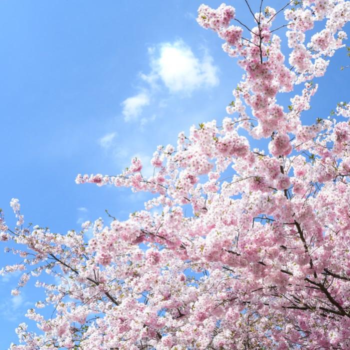 Bluetenbaum